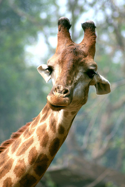 giraffe-in-a-tree:  Ooooh girl what'd you just say?