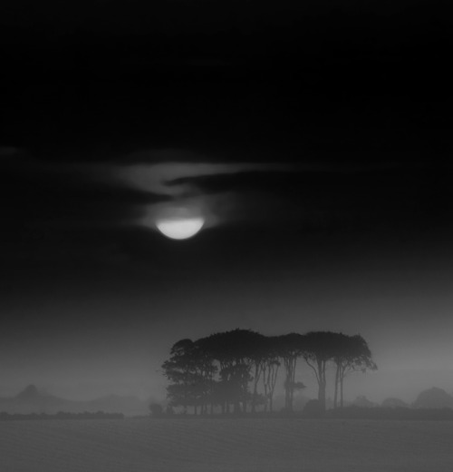 photowilliams: Mist Rising at Sunset