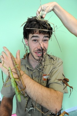 buggirl:  How do I get this guy's job? The insect keeper at Wildlife Sydney promoting the opening of Bug's Garden habitat.   I think bugs are cool, but this is bit excessive. :P I'm sure this will give a ton of you guys nightmares. xD I'll appreciate bugs from a distance, especially away from my face!