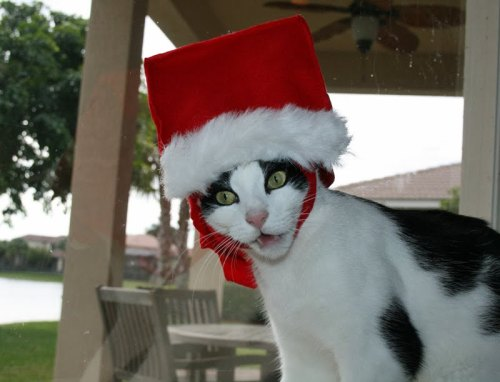 Look at the cool HAT I found! Source Daisy the Curly Cat