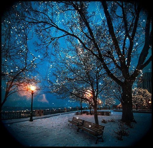 Blue Winter Wonderland