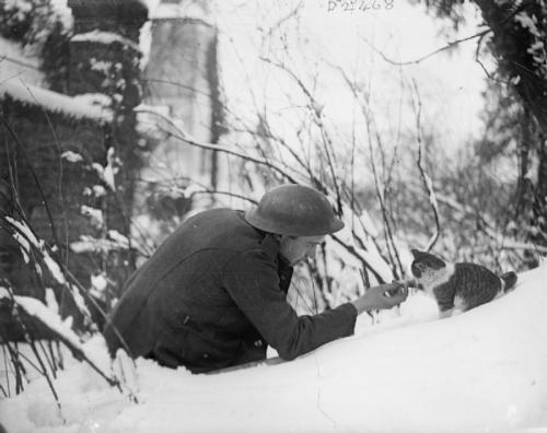 "the-seed-of-europe:  A British soldier ""shakes hands"" with a kitten on a snowy bank, Neulette, 1917. In the Christmas truce film Joyeux Noël, a cat runs back and forth between the enemy trenches to soldiers that feed it. One names the cat Felix and the other Nestor, and when the two meet in No Man's Land during thet ruce, a sweet argument ensues between the two men over whose cat it is and what is, in fact, its name. The director of the film, Carion, drew on a real life story of a cat who did this during the truce and was ultimately shot for treason: ""Towards the end of the film Major General Audebert says 'I've been ordered to arrest a cat for treason.' A cat portrayed in the film as Felix/Nestor, was actually arrested and shot for espionage after it arrived in French lines wearing a new collar and bearing a note (in French) which read 'which regiment are you from?'. The general in charge decided just to follow the letter of the law, the cat was shot for spying."" (Source. Carion also talks about this in the making of of Joyeux Noël.) The real-life story was so ridiculous and upsetting, Carion decided not to include its ending in the film but only mention it in passing, because he thought the viewers of the film would not believe the absurdity of a cat being shot for treason. It's going to be a soldiers with kittens kind of day, I guess."