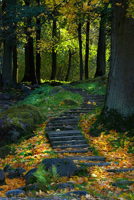 bluepueblo:  Forest Path, Ukraine photo by Syrmolotov   I just can't.. :')