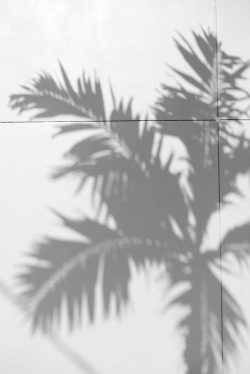 terrysdiary:  Palm tree shadow. derp