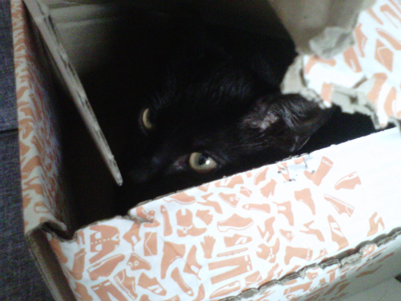 aintgotnomoneyinmypocket:  my little cutie cat in a zalando box (: