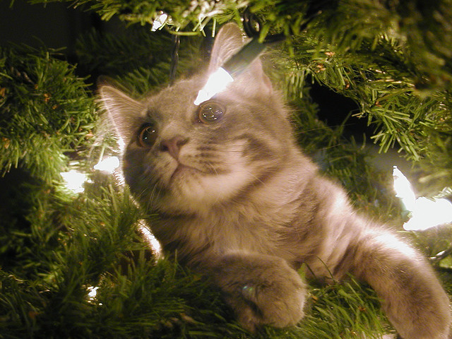 photobina:  climbing in the christmas tree by Susan E Adams on Flickr.