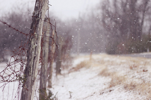 "extravagantfeeling:  ""The cold was our pride, the snow was our beauty.   It fell and fell, lacing day and night together in a milky haze, making everything quieter as it fell, so that winter seemed to partake of religion in a way no other season did, hushed, solemn."" (by fraley_tera)"