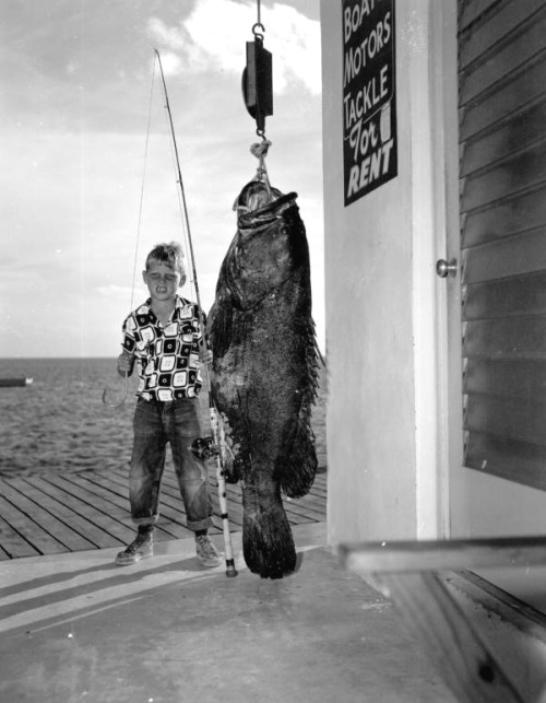 Marathon boy with a 225-pound jewfish, 1953. Source: Department of Commerce