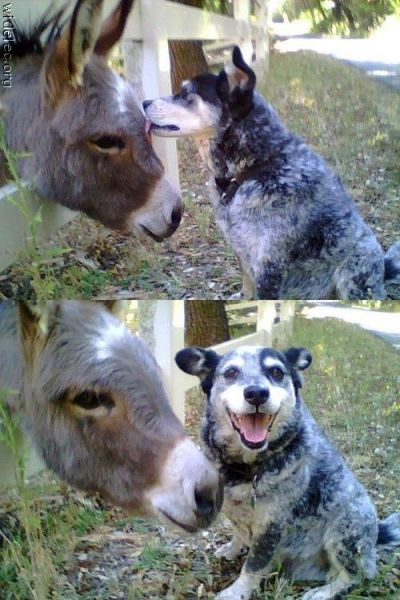 zoo:  Funny Animal Couples (104 pics) - Izismile.com