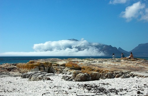Chapman's Bay, Cape Peninsula, South Africa. Baía Chapman's, Península do Cabo, África do Sul. Photo copyright: Ian Junor