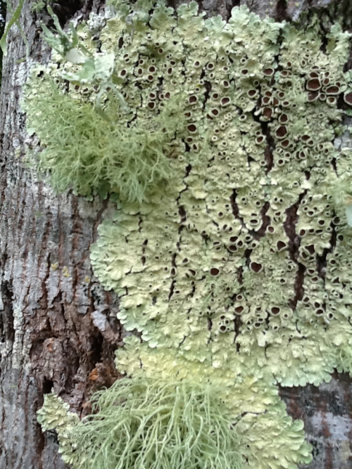 What are you 'lichen' this Christmas?