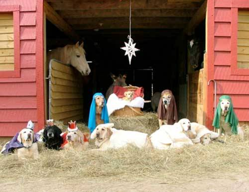 bestweekever Dog Nativity scene with a horse onlooker Original Article