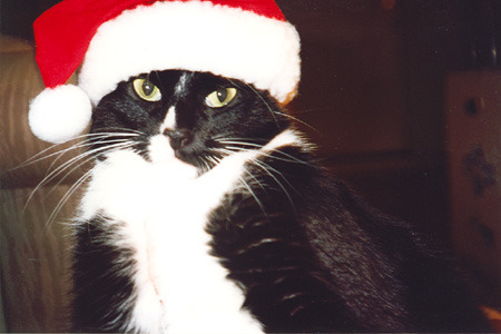25 Cats in Santa hats.