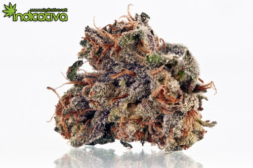 Strain Photo: Purple Frost Stock images available. Photo by: Chrizm (chrizm@indicativa.net)