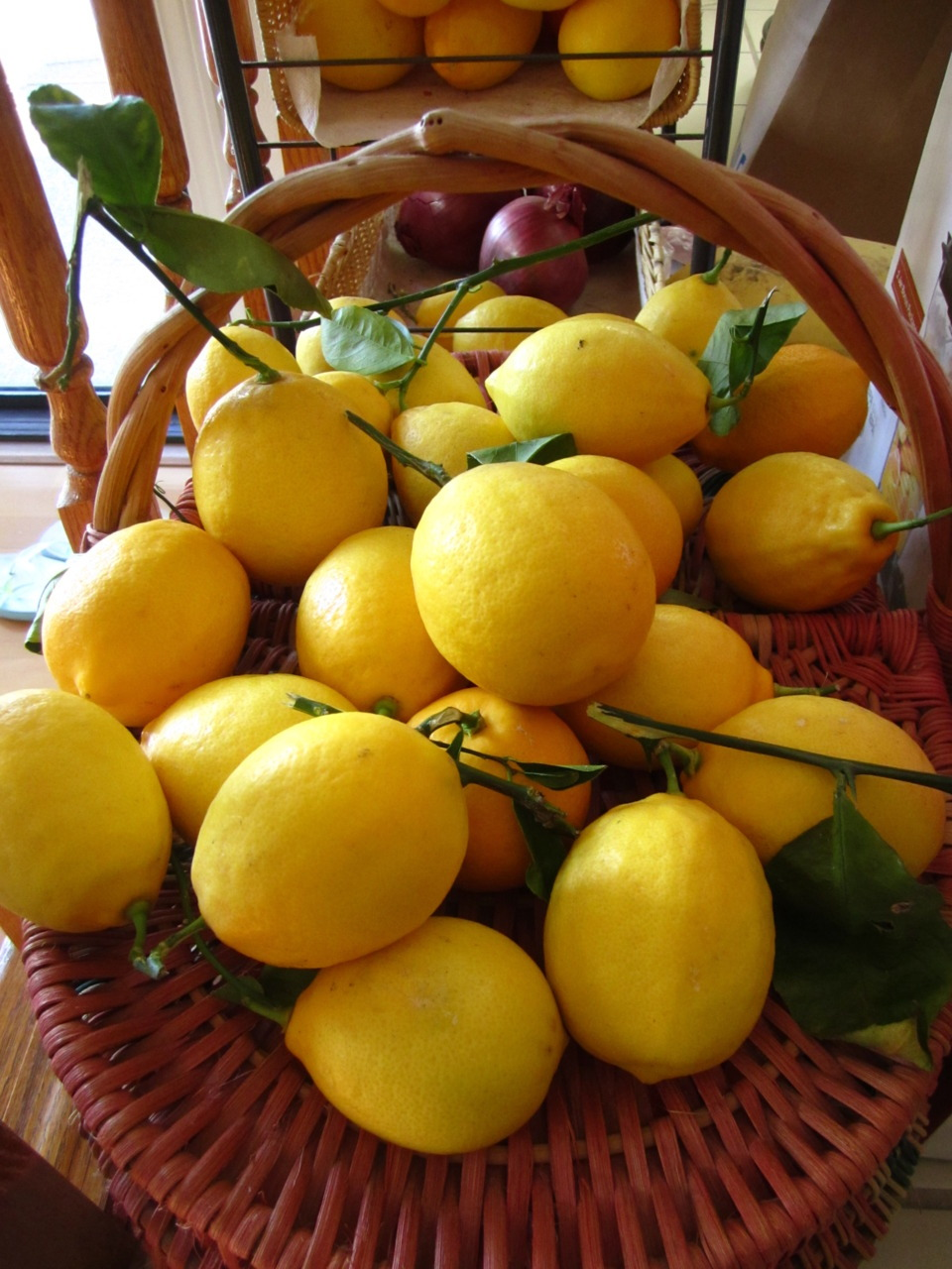 Lemons from my backyard. (: It's such a wonderfully sunny day; Yay California!