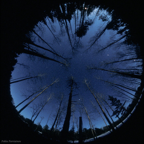 cwnl:  Fish Eye & The Forest A fish eye view on a clear northern night in a forest in Finland. by Pekka Parviainen