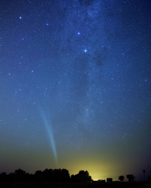 cwnl:  Comet Lovejoy over Argentina Copyright: Luis Argerich