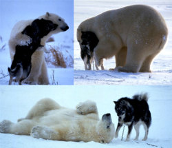 AWWWW!! I wish i had a polar bear…