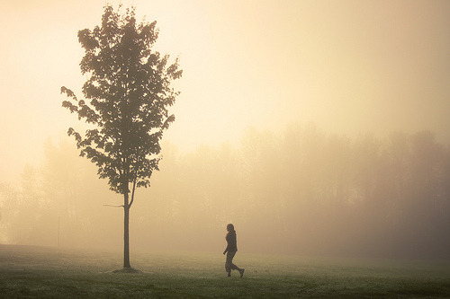 (by Elizabeth Gadd) | Tumblr