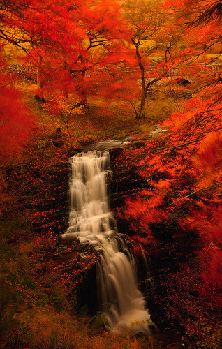 llbwwb:  'Scaleber Force in Autumn' - Yorkshire Dales. (by Steve Thompson images)