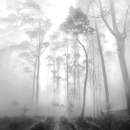 Tall Tree by Hengki Koentjoro on Flickr.