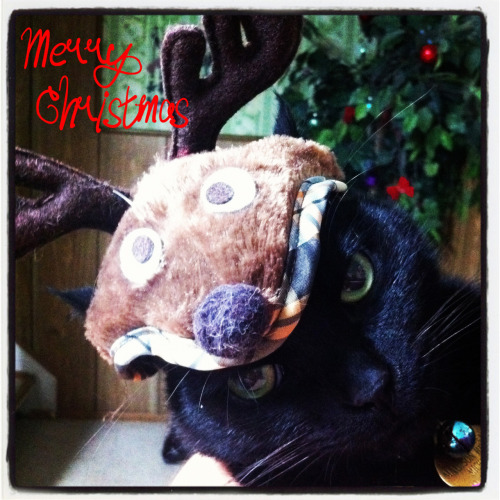Merry Christmas! Love, Algae Veronica and her very happy cat. (hahahaha)