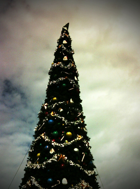 A Disney Christmas Tree.  Taken during my early Christmas present to WDW last month. -Cory U