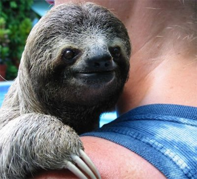 anonymau5whale:   look at this sloth this sloth is content with its life look at him hes like  yeah im a sloth and i accept myself  no. he's more like, these claws could slit this faggots throat at any time talk shit mother fucker and i will kill everyone
