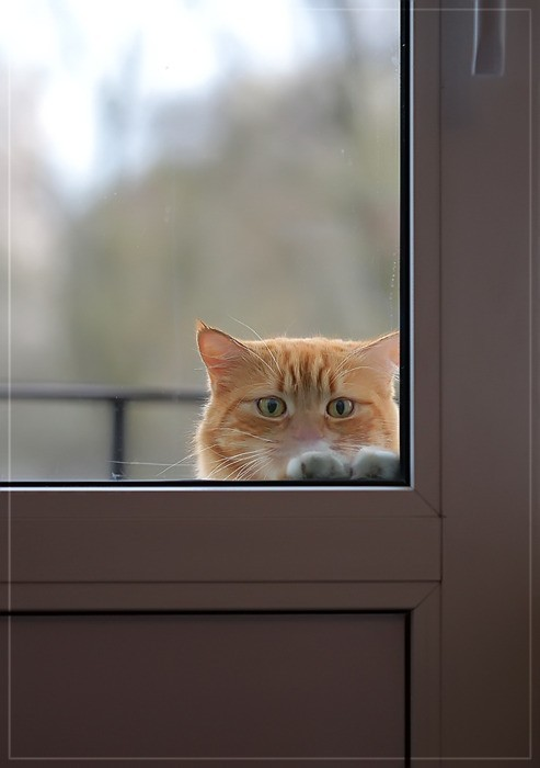 dyingofcute:  You really not going to let me in?