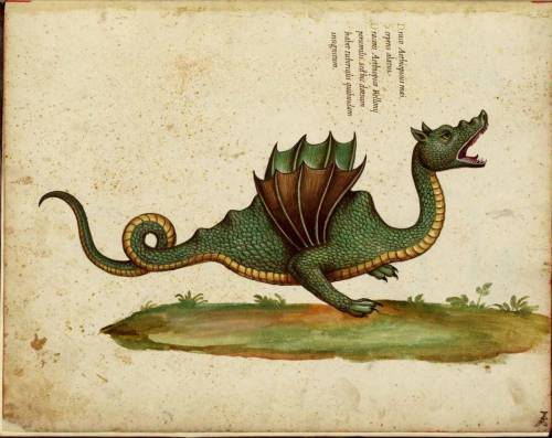 2012. Year of the Dragon begins January 23rd.  Illustration by Ulisse Aldrovandi, from his opus magnus Historia serpentum et draconum (1640)