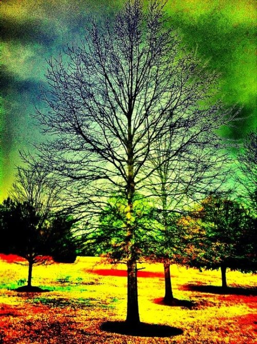 #Christmas #day #bfe #nature #trees #iPhoneography #Random #rightnow #photography #roadtrip (uploaded with Streamzoo.com)