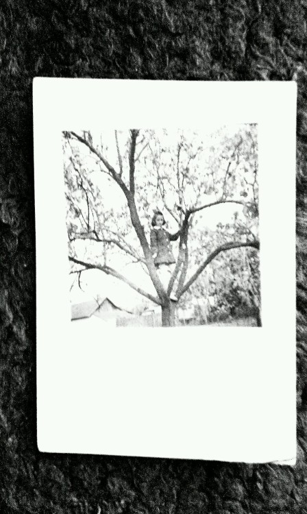 *girl on a tree  - a found photo, from my gandma's heritage