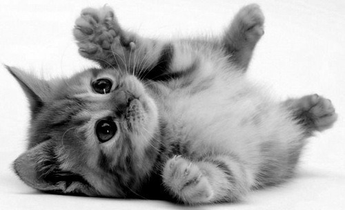 Tumblr on We Heart It. http://weheartit.com/entry/20023858 little cute cat :)