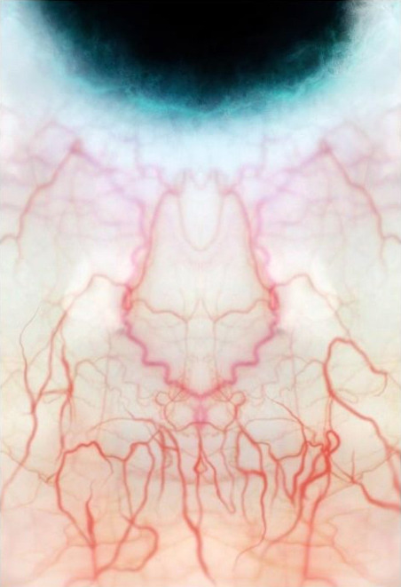 articulomortis:  blood vessels of the eye