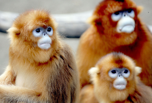 thedaintysquid:  (by floridapfe)  New favorite monkey.