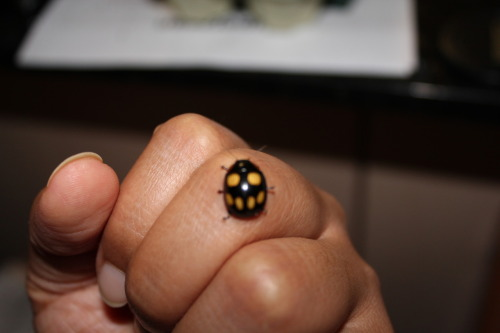 A funky ladybug…looks like a strange yellow skull…