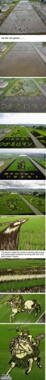 Epic Win-Rice Field Art