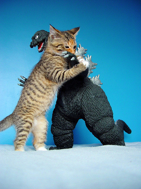 hotmonsters:  cryptofwrestling:  Kitty hopes to stop the Godzilla menace.