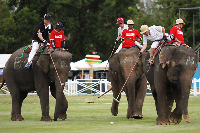 Participants in the Elephant Polo Tournament in Hua Hin, which is 100 miles south of Bangkok, fight for the ball during their match in September. Twelve international teams ride Thai street elephants during the week-long tournament (REUTERS/Damir Sagolj)