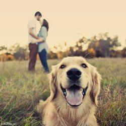 love dog photography couple cute adorable puppy romance kiss golden retriever