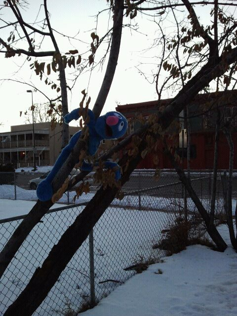 Puppets in trees are hipster, right? Grover had a rough night.