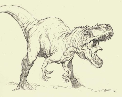 fuckyeahdinoart:  Allosaurus sketch by ~grobles63  FY!!! :D
