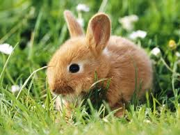 If I had one of these dwarf rabbits, you bet your ass I'd name it Tyrion Lannister. #ASOIAF