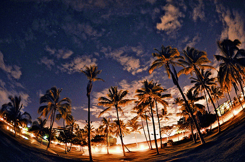 surferdude182:  Palm trees at night (by Tasha Maríe)