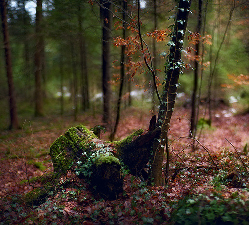 lori-rocks:  A walk in the woods  By C.Rangefinder