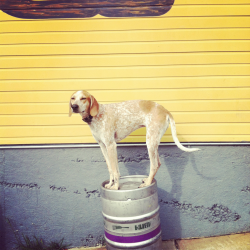 Maddieonthings is hilarious.  Obviously, Maddie on a Keg is my favorite.  Maddie in wellies is a close runner up. maddieonthings:  Jackson, MS