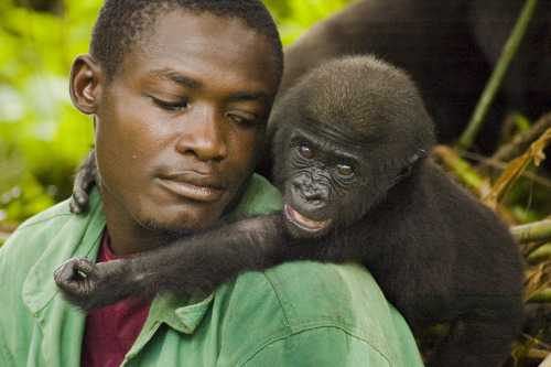 travelingcolors:  Gorilla Orphanage at Lake Evaro | Gabon (by moodyworld)