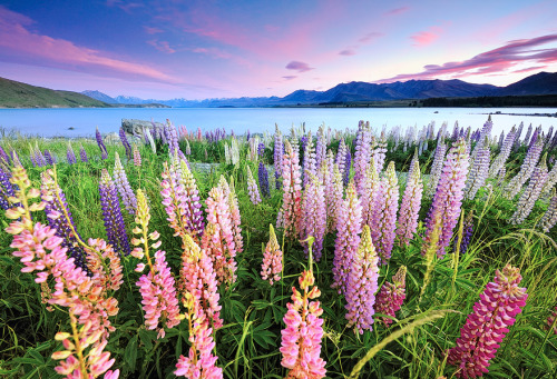 neiture:  Lake Tekapo | image by Atomic Zen