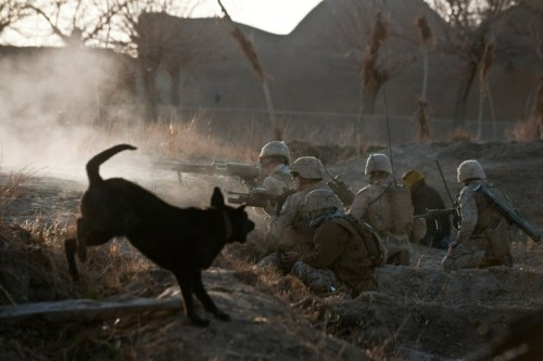February 4, 2011. U.S. Marines from 1st Battalion, 8th Marines fire at alleged Taliban fighers as their dog Miely runs around outside new Mirage base in Afghanistan. U.S.-led NATO troops are under a deadline across Afghanistan to train local forces to take responsibility for their country's security by 2014.
