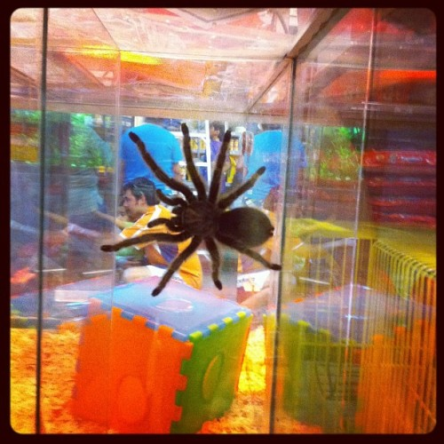 Tarántula  (Taken with instagram)